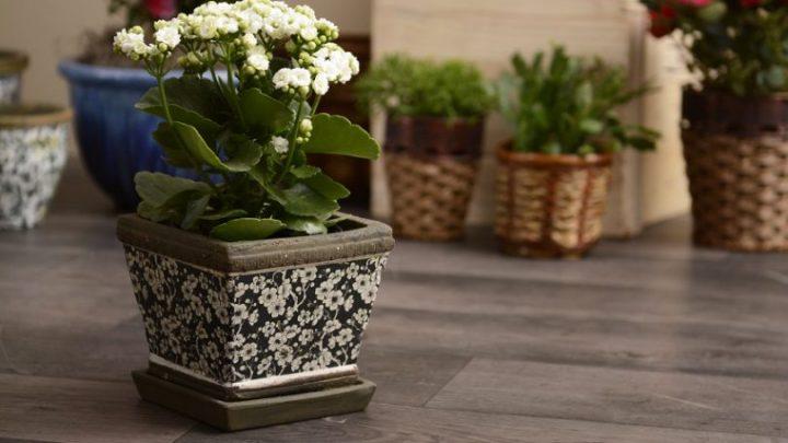 vaso-de-terracota-colorido