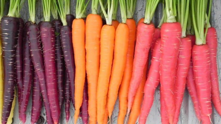 cenoura-historia