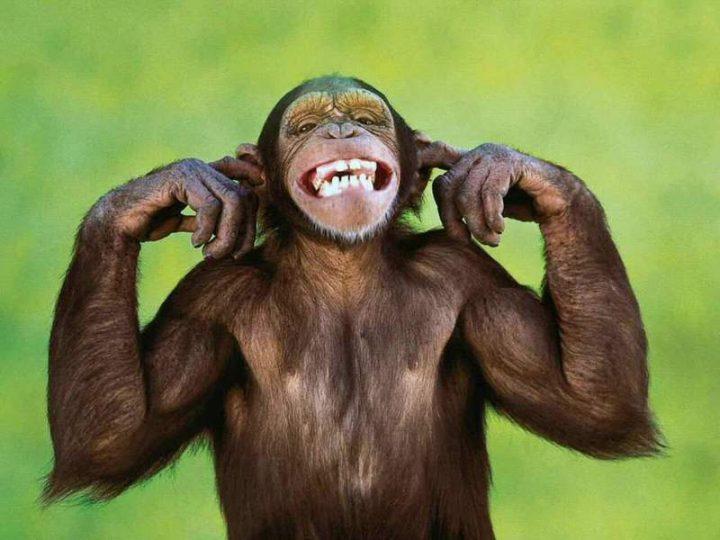 sonhar-com-macaco