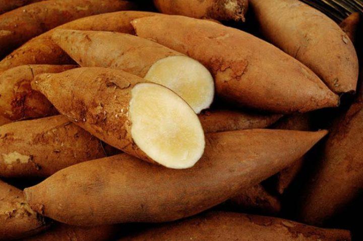 batata-yacon-para-controlar-a-diabetes