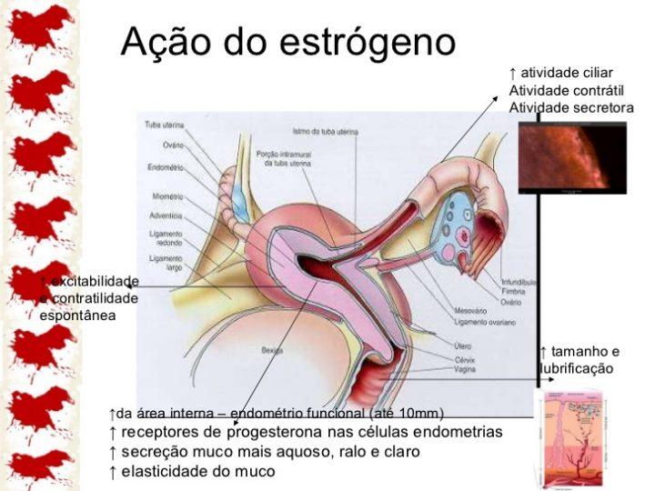 ciclo-menstrual-15-728 (1)
