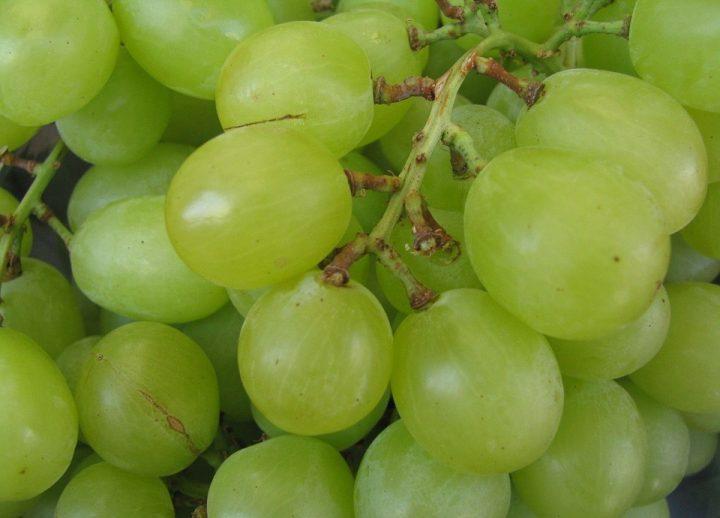 grape-89081_960_720