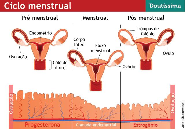 info-ciclo-menstrual