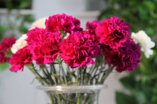 Image result for cravos flores