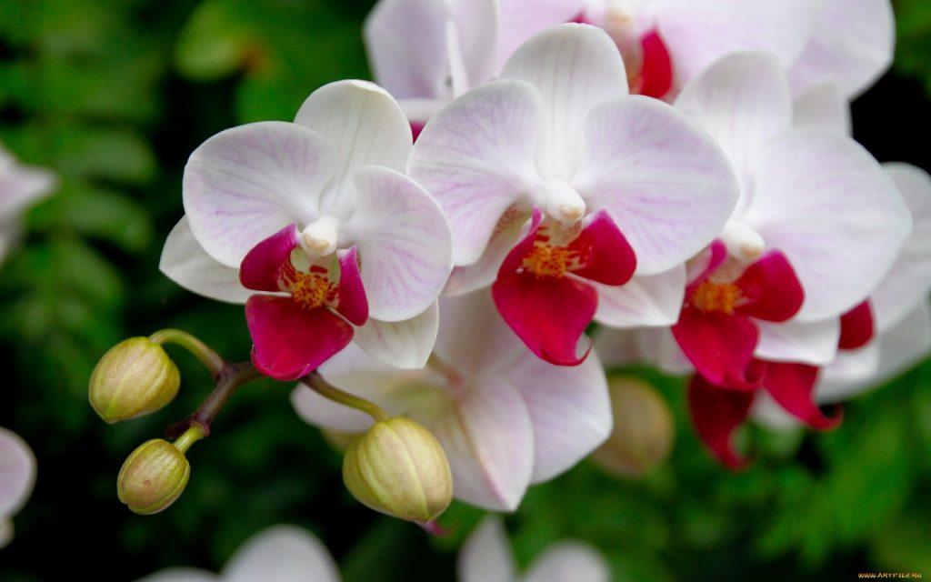 cultivo-de-orquideas-12