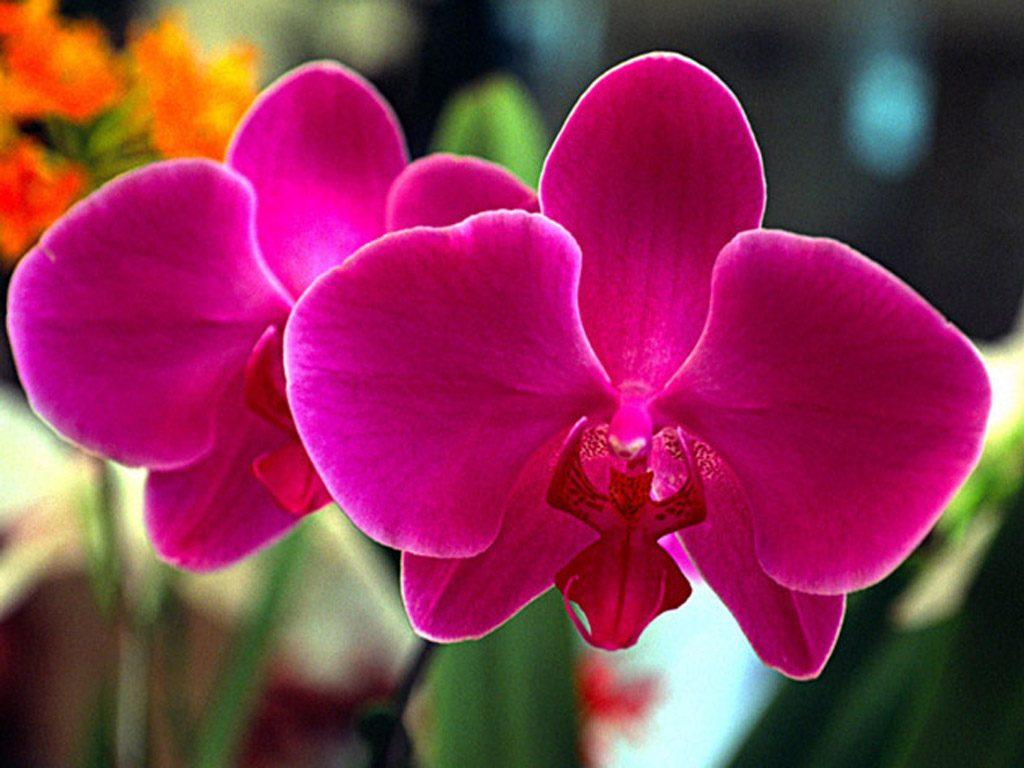 cultivo-de-orquideas-5