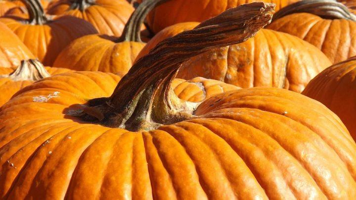 pumpkin-1009999_960_720