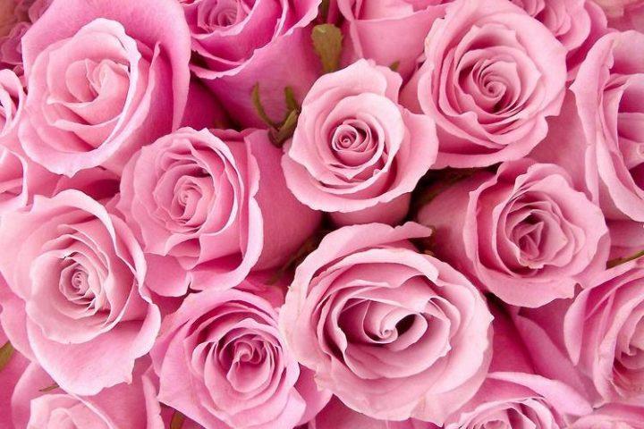 Os Principais Tipos De Flores E Suas Caracteristicas Tudo Ela