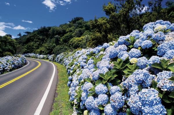 6-primavera-flores-azuis-na-estrada