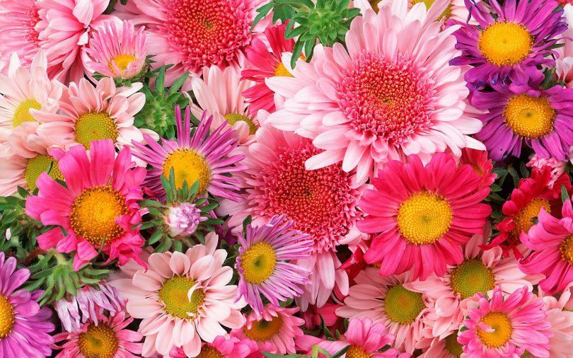 Top Nomes de Flores de A a Z; conheça seus significados - Tudo Ela GZ31