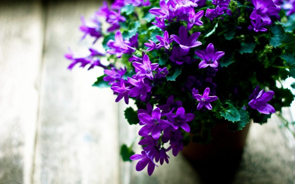 flowers-pot-flowering-leaves-sharpness-2880x1800