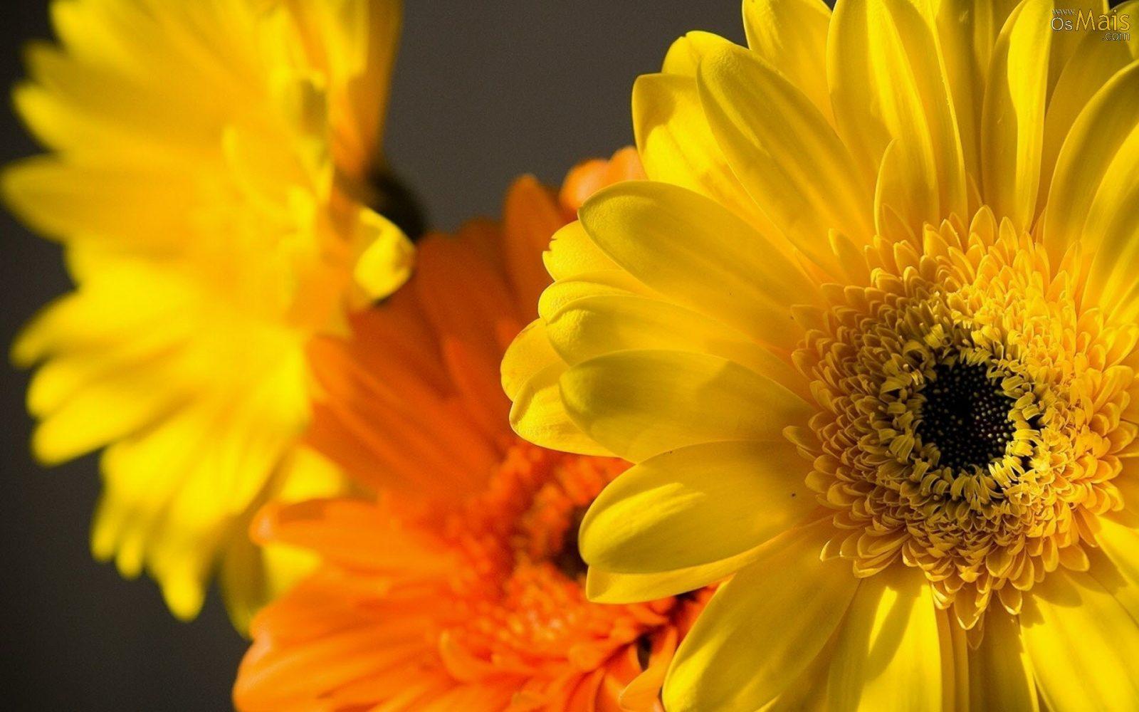 Flores Amarelas São Encantadoras E Radiantes Saiba Mais Tudo Ela