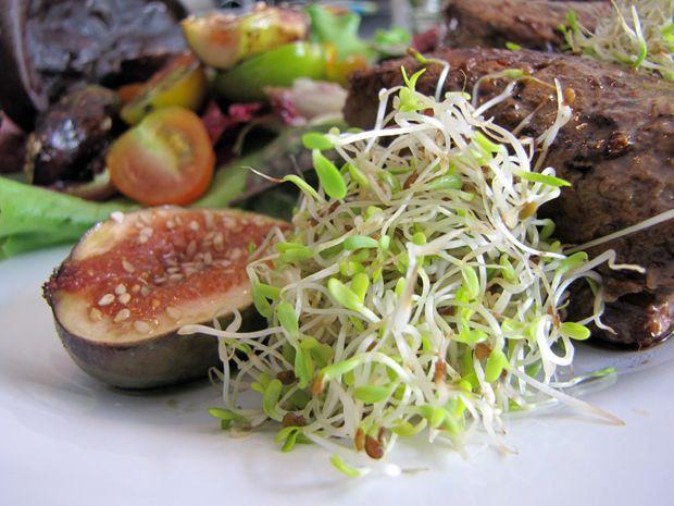 salada01_broto_de_alfafa02