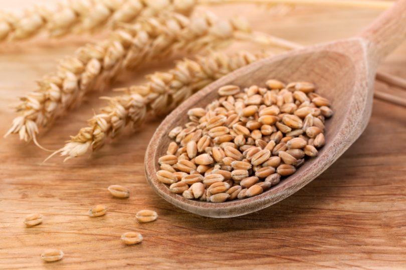 Resultado de imagem para Gérmen de trigo