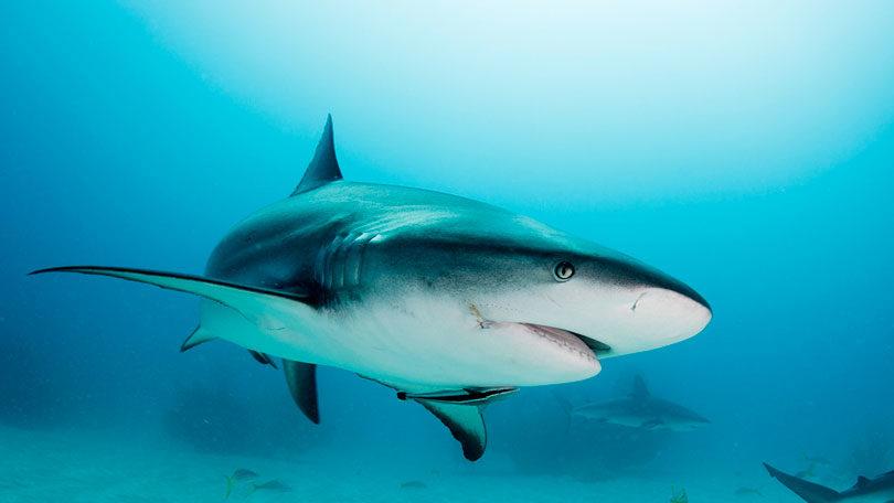 Tudo sobre o Tubarão Cartilagem-de-tubar%C3%A3o-810x456