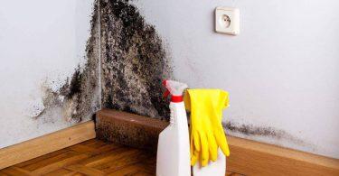 Tirar mofo de casa