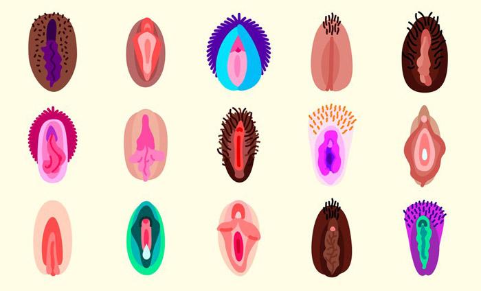 Tipos de vagina