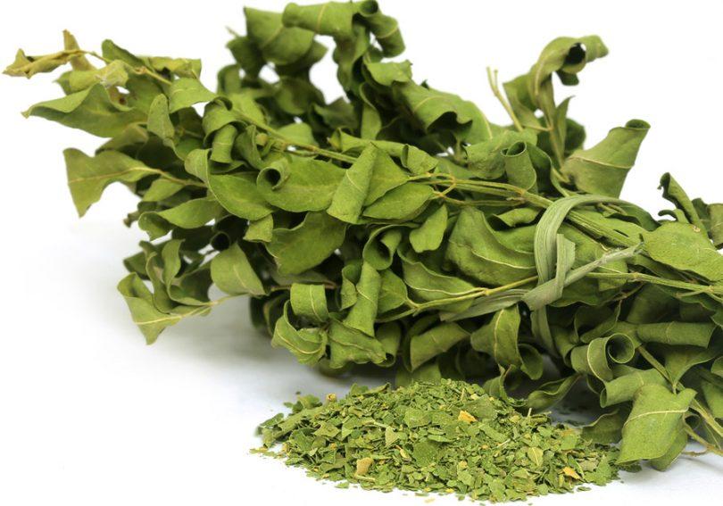 Benefícios chá de moringa